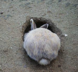 Rabbit-hole